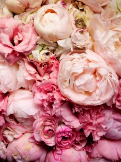 "3p3g:  ""Heralded as the Queen of Flowers for over a millennium, the peony perfectly combines delicacy with a hearty heft.  Such a magnificent flower measuring up to six inches in diameter with feathery anthers and subtle gradations of color could only be crafted by the most genius artist, Mother Nature herself."""