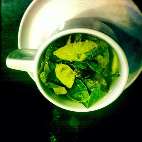 welcome to peru.. here's your coca tea. #nobigdeal (Taken with Instagram at Picoaga Costa Del Sol)