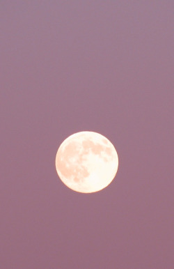 manolescent:  full moon pink sky