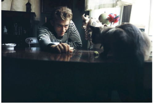 kittehkats:  James Dean and Marcus Dean's cat's… a present from Elizabeth Taylor. source: thethoughtexperiment.wordpress.com