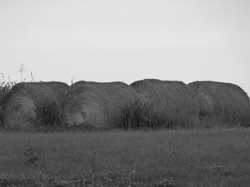 """Rollin' In The Hay "" by ThinkPics 