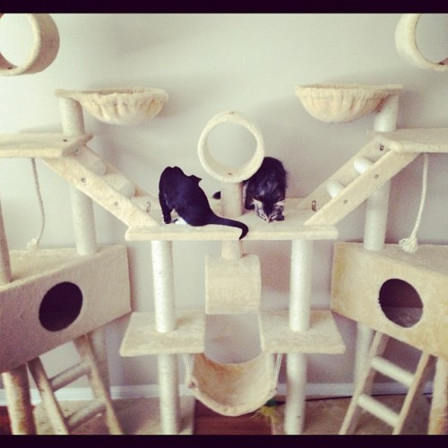yumwatch:  Oh, have I ever shown you guys Troy & Abed's cat condo? No? Because it's absolutely absurd? Right. (Taken with Instagram)  What Troy & Abed really need are blanket and pillow forts…