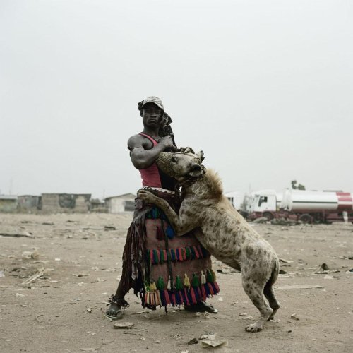 Pet Hyena in Nigeria