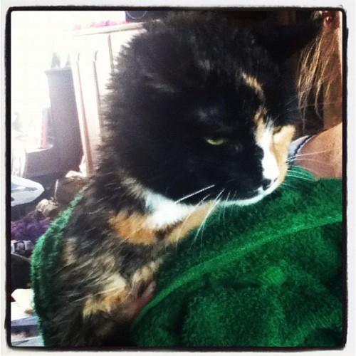 Dusty post bath! #cat #cute #kitty #feline  (Taken with Instagram)
