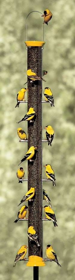 touchn2btouched:  Yellow - Gold Finches