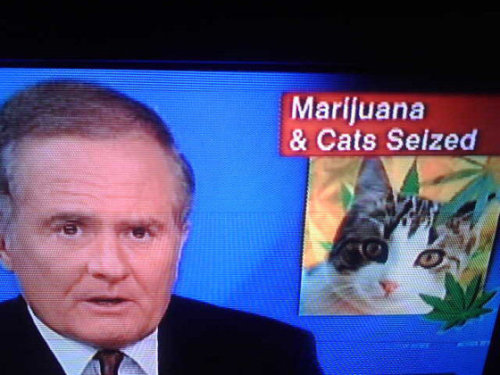 Cats are a gateway drug.