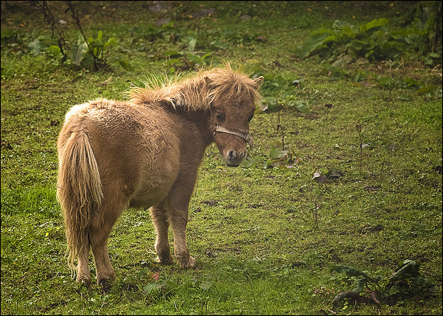 chasingthegreenfaerie:  Bog pony by kaysare on Flickr.