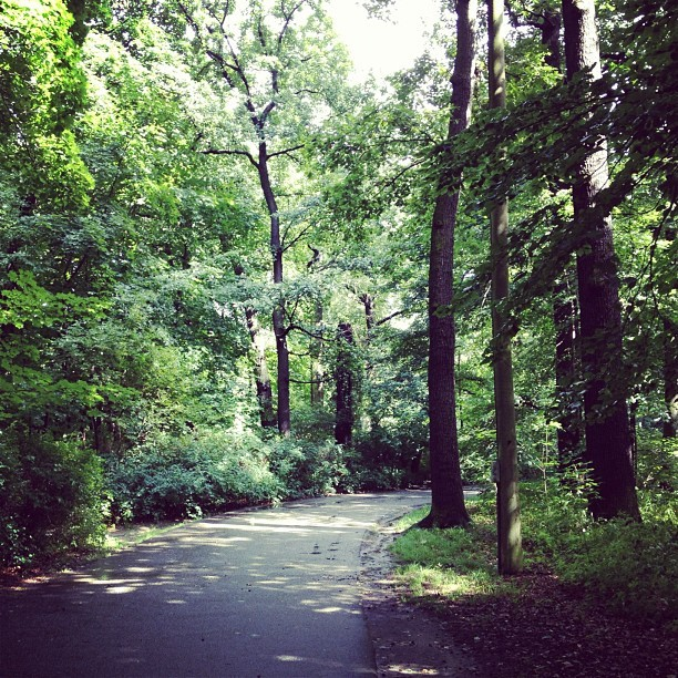 #forrest #woods #tree #trees #path #green #rain #berlin #friedrichsfelde #tierpark #zoo #instacrazy #instamania #iphone4s #iphoneography #igdaily #picoftheday #designer #igers #germany  (Wurde mit Instagram in Tierpark Berlin aufgenommen.)