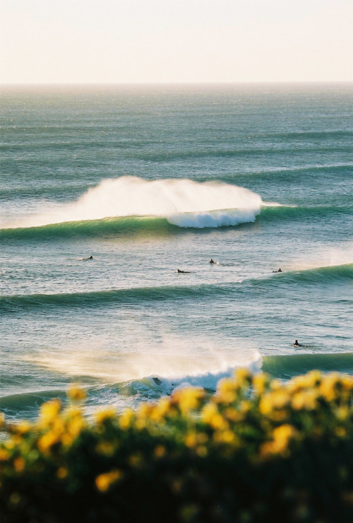 the-dreaming-of-paradise:  aquaticwonder:  Surf  (via imgTumble)