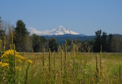 current-and-tension:  Mt. Hood, gorgeous meadow, perfect day.