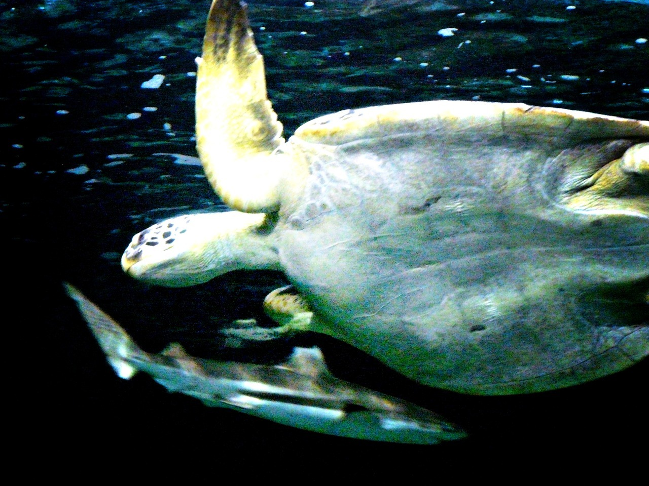 - Turtle And Shark - I know people who like creatures of the sea.