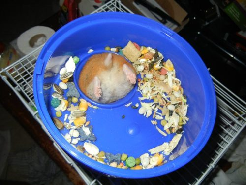 oftenwrong:  My hamster needs more time on the wheel