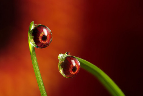 What was that ? dewdrop refraction #4 by Lord V on Flickr.