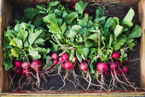 farmers market radishes (by hannah * honey & jam)