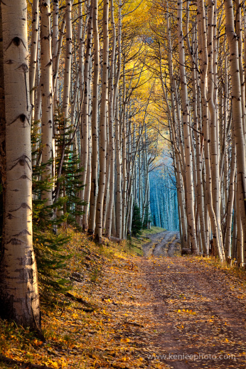 """Aspen Cathedral"" by Ken Lee"
