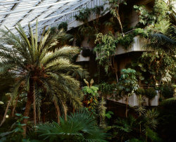 nickalthouse:  Barbican Conservatory Photo by Misha de Ridder