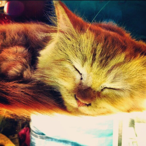 CatNap (Taken with Instagram)
