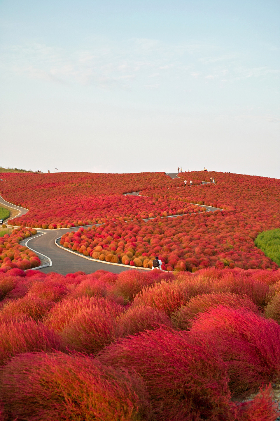 Kochia Hill, Hitachinaka City via