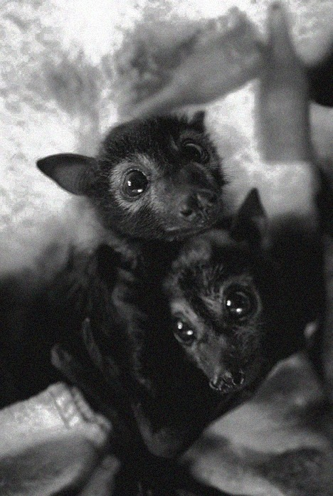 Bats are adorable.