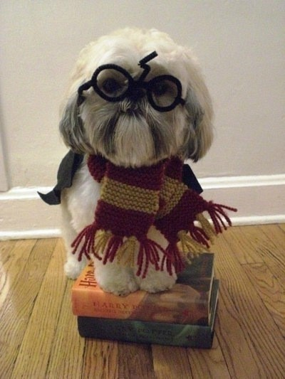 funfoever:  adorable dog with glasses (via We need more fun for our boring life | TheFailBlog.org)