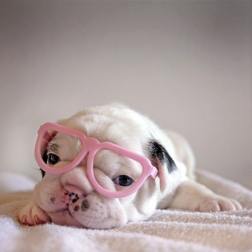 funfoever:  puppy in pink glasses (via We need more fun for our boring life | TheFailBlog.org)