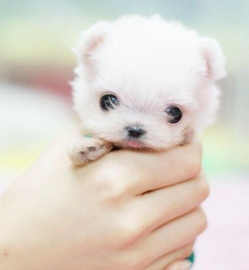 funfoever:  baby dog (via We need more fun for our boring life | TheFailBlog.org)