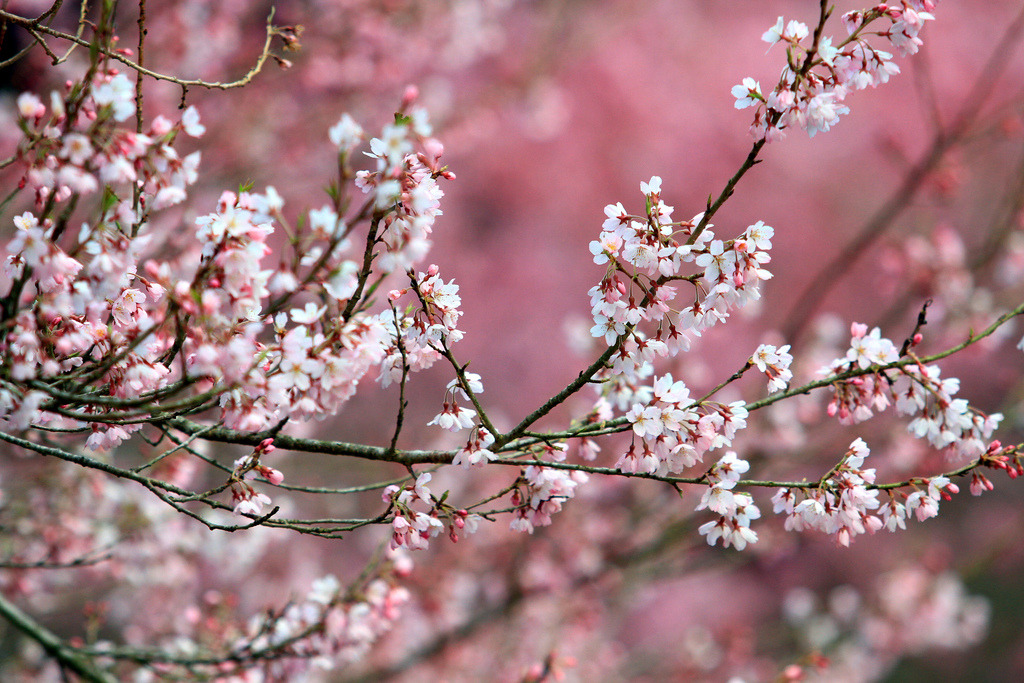 connipti0n:  Pink on pink (by Brian W Chu)