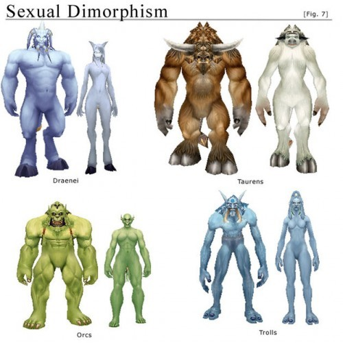 "gamerisms:  Sexual Dimorphism in World of Warcraft. The term sexual dimorphism refers to differences between males and females of the same species.  Some animals are highly sexually dimorphic. Male elephant seals outweigh females by more than 2,500 pounds; peacocks put on a color show that peahens couldn't mimic in their wildest dreams; and a male anglerfish's whole life involves finding a female, latching on, and dissolving until there's nothing left but his testicles (yes, really). On the spectrum of very high to very low dimorphism, humans are on the low end.  We're just not that kind of species.  Remove the gendered clothing styles, make up, and hair differences and we'd look more alike than we think we do. Because we're invested in men and women being different, however, we tend to be pleased by exaggerated portrayals of human sexual dimorphism (for example, in Tangled). Game designer-in-training Andrea Rubenstein has shown us that we extend this ideal to non-human fantasy as well.  She points to a striking dimorphism (mimicking Western ideals) in World of Warcraft creatures. Annalee Newitz at Wired writes:  [Rubenstein] points out that these female bodies embody the ""feminine ideal"" of the supermodel, which seems a rather out-of-place aesthetic in a world of monsters. Supermodelly Taurens wouldn't be so odd if gamers had the choice to make their girl creatures big and muscley, but they don't. Even if you wanted to have a female troll with tusks, you couldn't. Which seems especially bizarre given that this game is supposed to be all about fantasy, and turning yourself into whatever you want to be.  It appears that the supermodel-like females weren't part of the original design of the game.  Instead, the Alpha version included a lot less dimorphism, among the Taurens and the Trolls for example. Newitz says that the female figures were changed in response to player feedback:  Apparently there were many complaints about the women of both races being ""ugly"" and so the developers changed them into their current incarnations.  The dimorphism in WoW is a great example of how gender difference is, in part, an ideology.  It's a desire that we impose onto the world, not reality in itself.  We make even our fantasy selves conform to it.  Interestingly, when people stray from affirming the ideology, they can face pressure to align themselves with its defenders.  It appears that this is exactly what happened in WoW."
