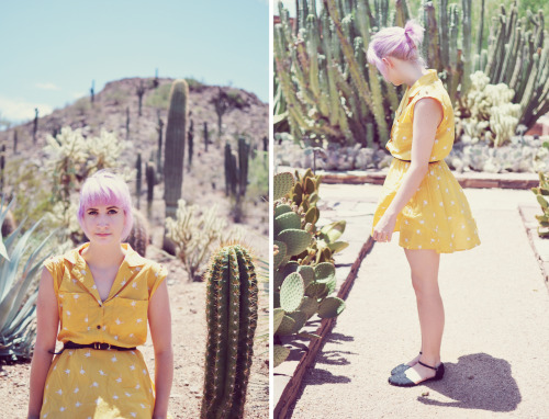 a blog post about the desert botanical gardens