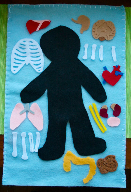 Discover the inside of the human body with this felt board anatomy set. Explore different organs and how they fit together to create organ systems. Overlay the pieces to see how different systems fit together and learn how the inside of your body works.   Source: http://www.etsy.com/listing/97682600/human-anatomy-felt-board-organ-systems