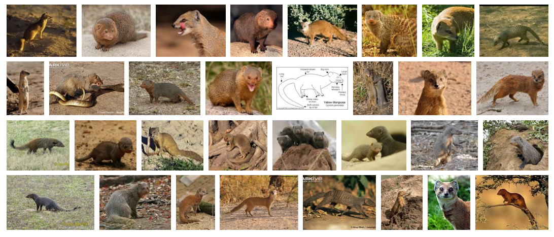 """Mongoose,"" Google Image search by Rob Walker, July 22, 2012 Suggested by Got Faded Japan."