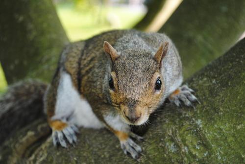 Squirrel by Alexander Cox