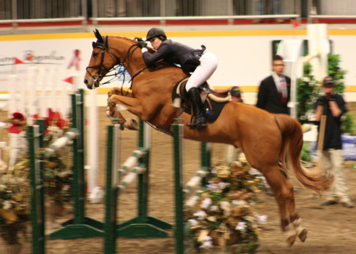 royal winter fair - credit