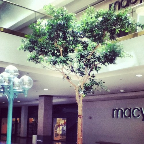 The mall….. #shopping #mall #center #valco #Cupertino #square #Macy's #tree #light #I #don't #really #like #this #one #though #buying #stuff #money I Like Valleyfair MUCH Better (Taken with Instagram)