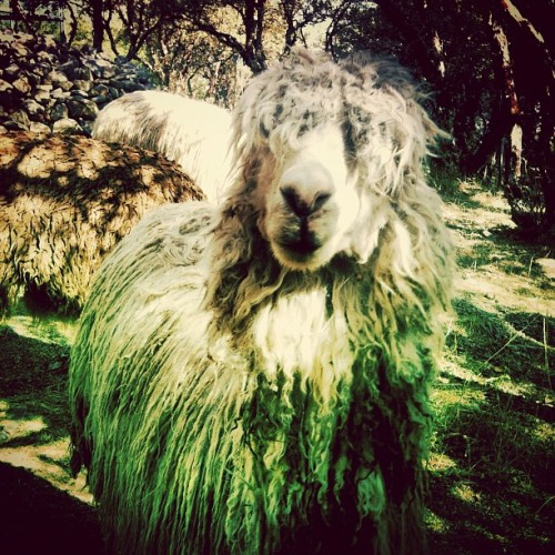 sup lama?.. your awesome (Taken with Instagram)