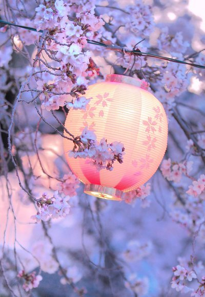 thelifeofdaydreams:  Lights and flowers.