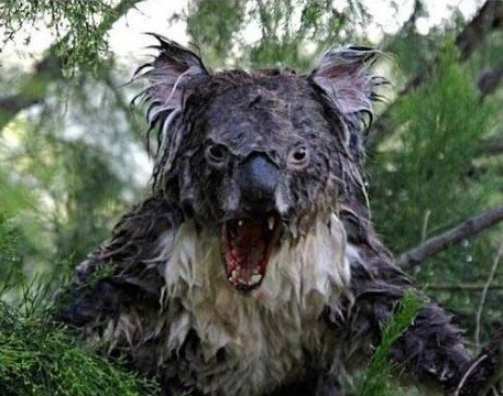 That koala is actually quite scary looking. o.O