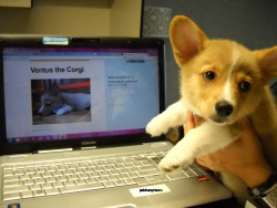 Look who stopped by and saw me looking at his tumblr :) For more cuteness, click on the photo for Ventus's tumblr!