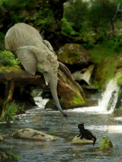 Volantene elephant rescuing a friend from the river