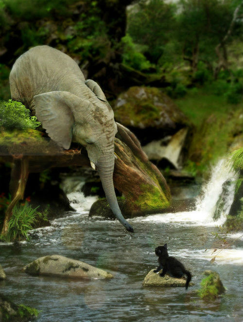 yuria:  Volantene elephant rescuing a friend from the river