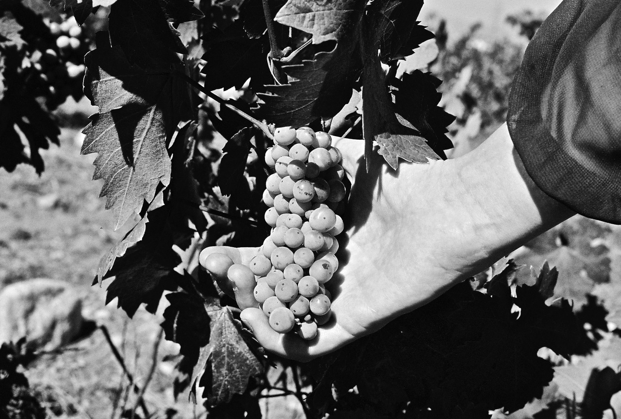 Palm of Grapes Shot on a Nikon D90 Source: Greg Kent