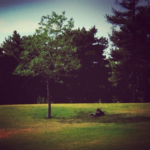 #grass #tree #person #laying #in #the #shade #reading #book #literature #lit #park #outside #outdoors #tree #trees #sky #blue #green #alone #relax (Taken with Instagram)