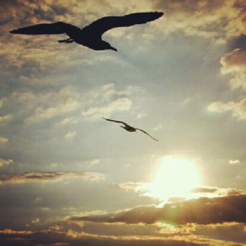 Sunsetting: birds flying in the direction of the sun. (Taken with Instagram)