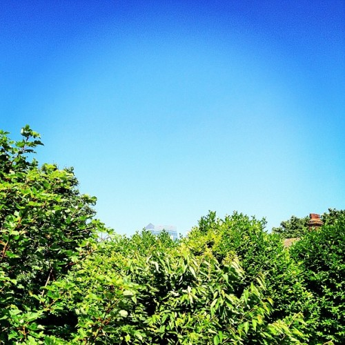 instahipsta:  The Sky Today • in Lofi • #bluesky #nocloud #summer #morning #greentrees #green #blue #chimney #skyscrapers #distance #canarywharf #isleofdogs #eastlondon #london #england #greatbritain #unitedkingdom #British #london2012 #july #2012 #lofi #lux (Taken with Instagram)