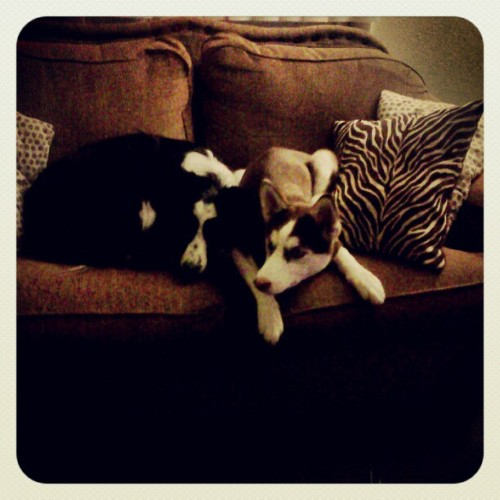 Found them laying together last night before bed - @chrissylynmc- #webstagram