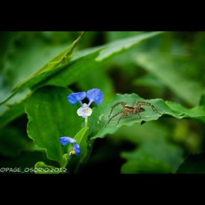 Someone is watching…. — #spider #grasshopper #flower #macrophotography #nature #leaf (Taken with Instagram at Look out!!! 😱)