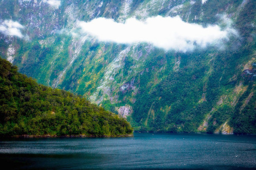 sav3mys0ul:  New Zealand (by Clickr Bee)