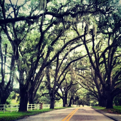 Relics of the South. #liveoaks #plantation #road #tallahassee #florida #south #trees #beautiful  (Taken with Instagram)