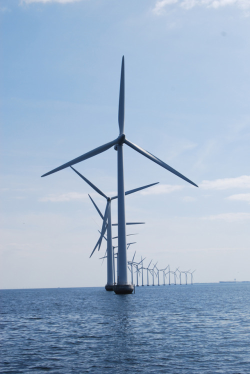 publicradiointernational:  Offshore wind turbines. (Photo from Living on Earth.) Five miles off the southern shore in Nantucket Sound beyond the sun, sand and surf, the wind blows steady and strong. For 10 years this vacation haven has been the scene of a knock-down drag-out fight over siting the nation's first offshore wind farm. The Cape Wind Project – as it's called – has come out the winner, having received all of the necessary state and federal approvals. The planned wind farm will spread 130 turbines across 25 miles. More.