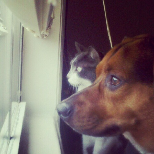 And this is what I wake up to #catdog (Taken with Instagram)